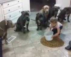 Pusieron A Su Hija De 4 Años Entre 6 Pit Bulls Y Su Comida. Esto Es Lo Que Pasó