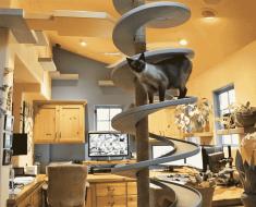 Adopta A 15 Gatos Y Hace Esto Para Ellos En Su Casa. ¡Conmovedor!