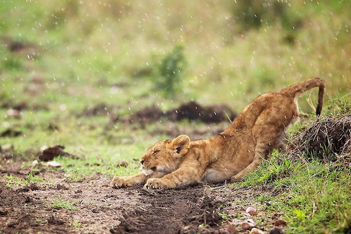 animal-estirandose-11