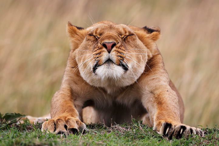 animal-estirandose-3