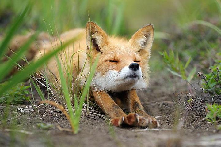 animal-estirandose-6