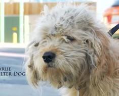 Afeitan A Un Perro Callejero. Lo Que Encontraron Debajo De Todo Ese Pelo Hizo Que Mis Ojos Se Llenaran De Lágrimas