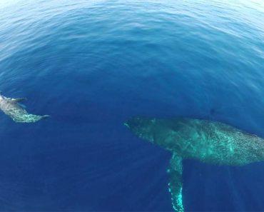 Drone Captura Algo Raro E Inusual Que Sucede En El Océano. No Te Lo Creerás