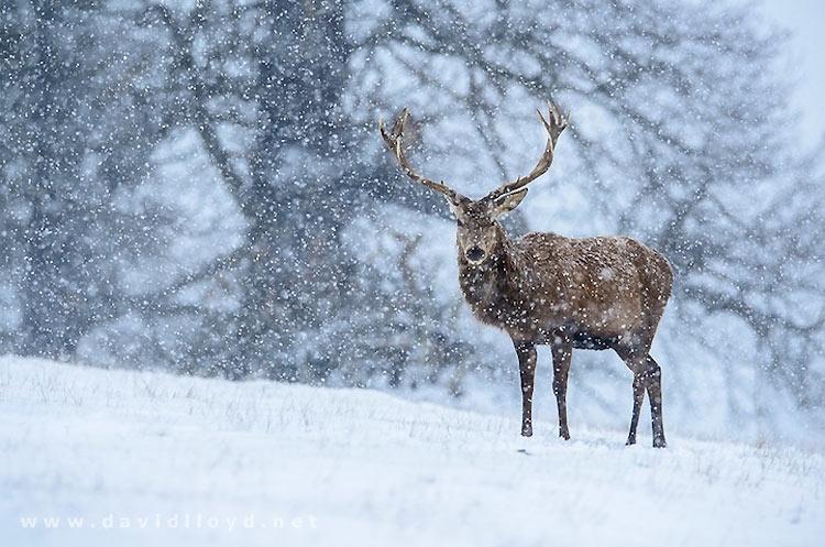 inviernos-en-el-mundo-15