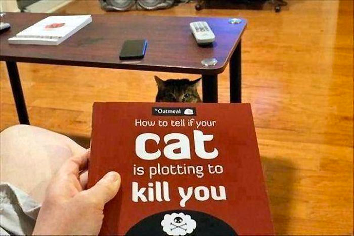 mascotas-planeando-matarle-13