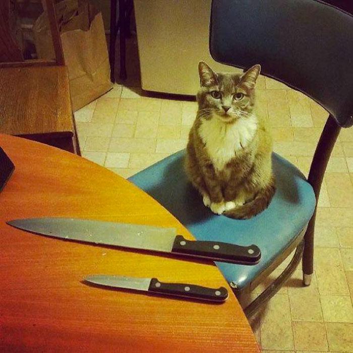 mascotas-planeando-matarle-8