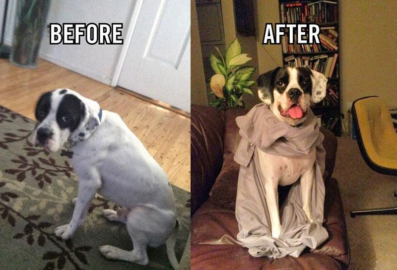 perro-adoptado-15