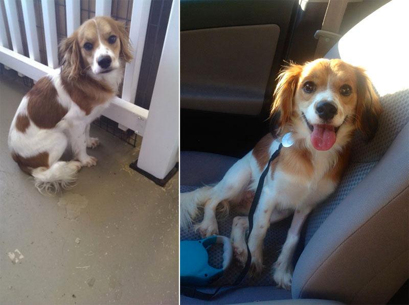 perro-adoptado-16
