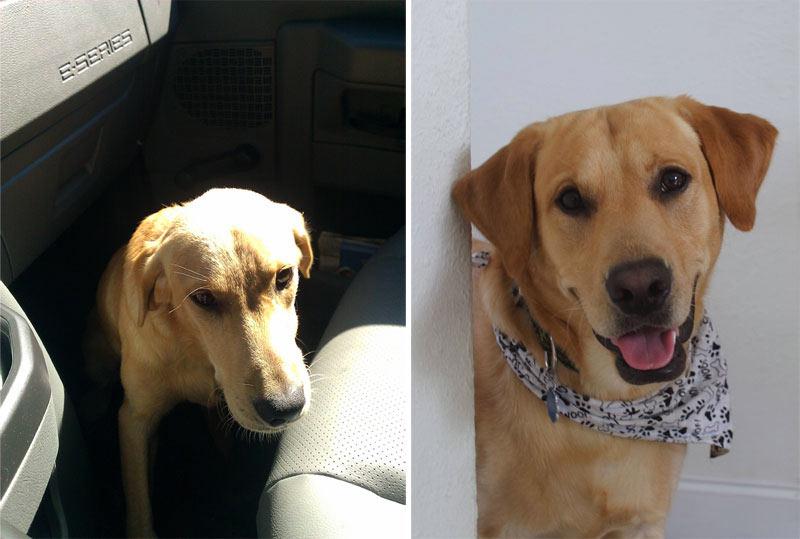 perro-adoptado-18