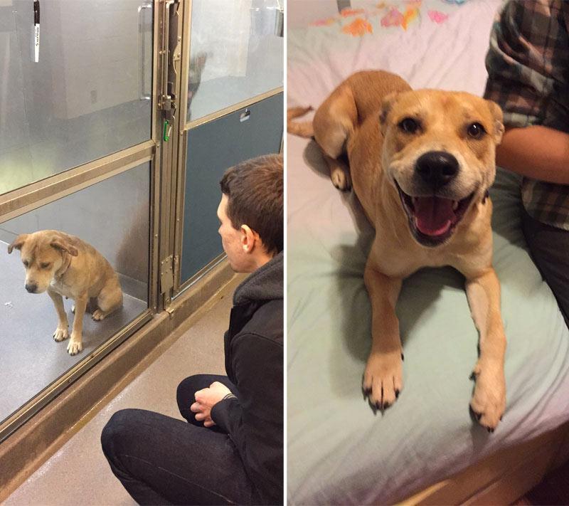 perro-adoptado-2
