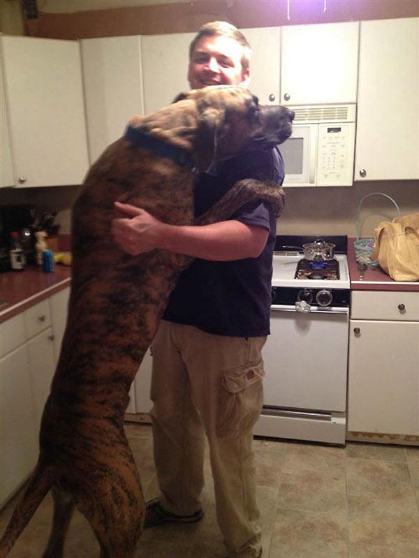 perro-gigante-05