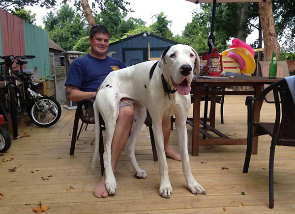 perro-gigante-06