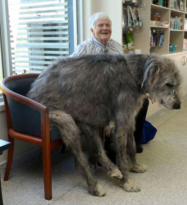 perro-gigante-08
