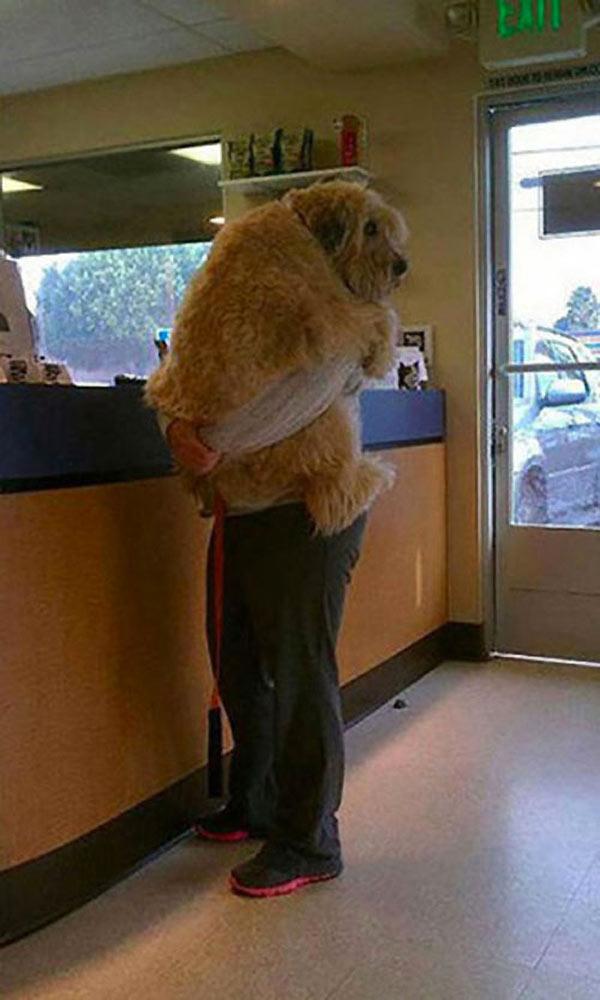 perro-gigante-10