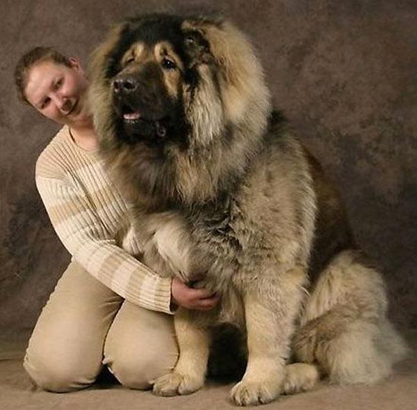 perro-gigante-12