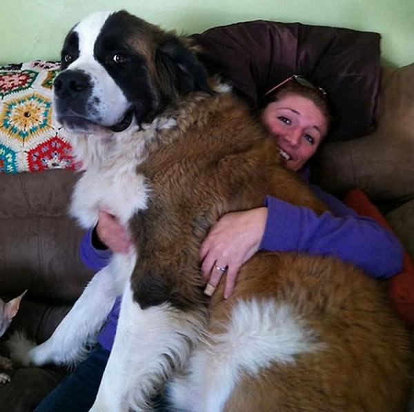perro-gigante-14