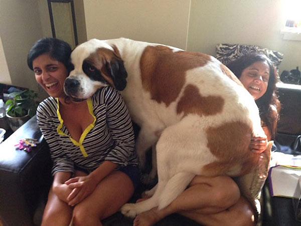 perro-gigante-16