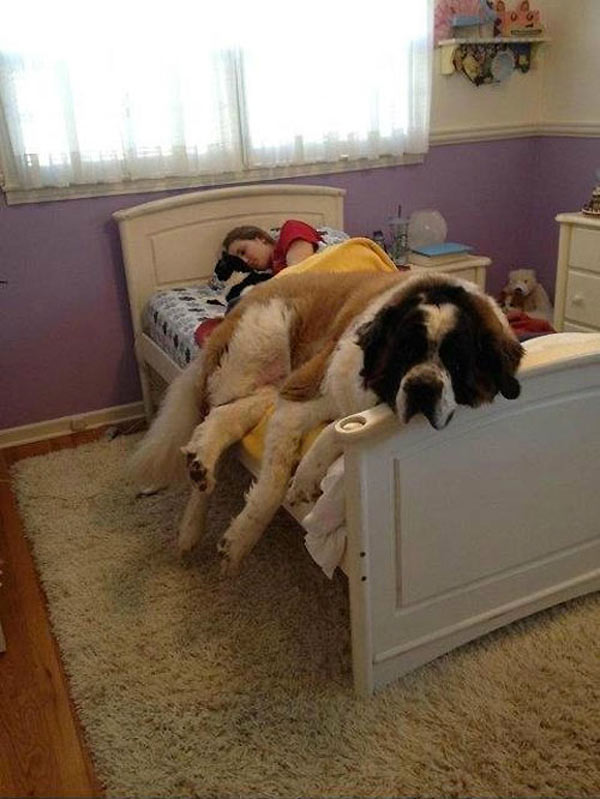perro-gigante-18