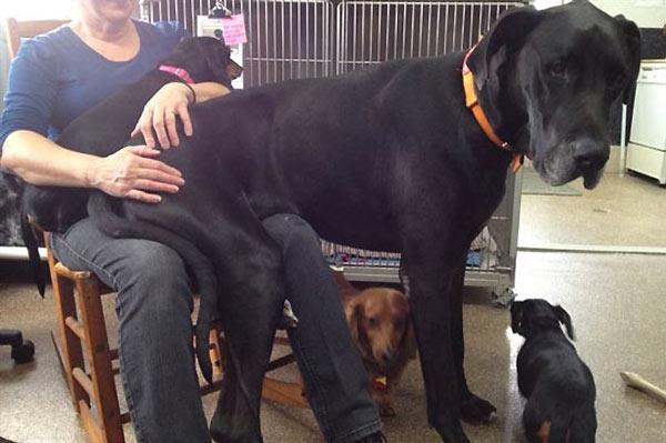 perro-gigante-20