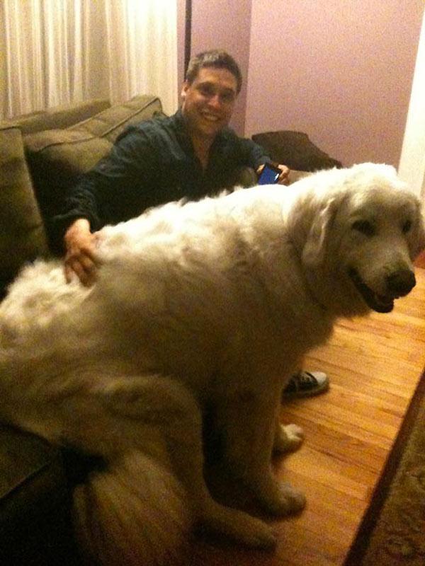 perro-gigante-22
