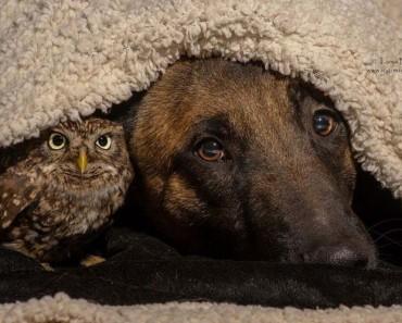 amistad-perro-buho-1