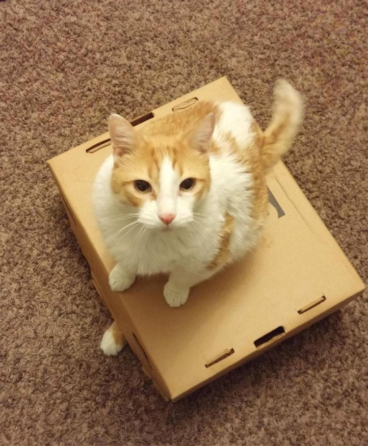 21 Razones Por Las Que No Podemos Dejar De Amar A Nuestros Gatos