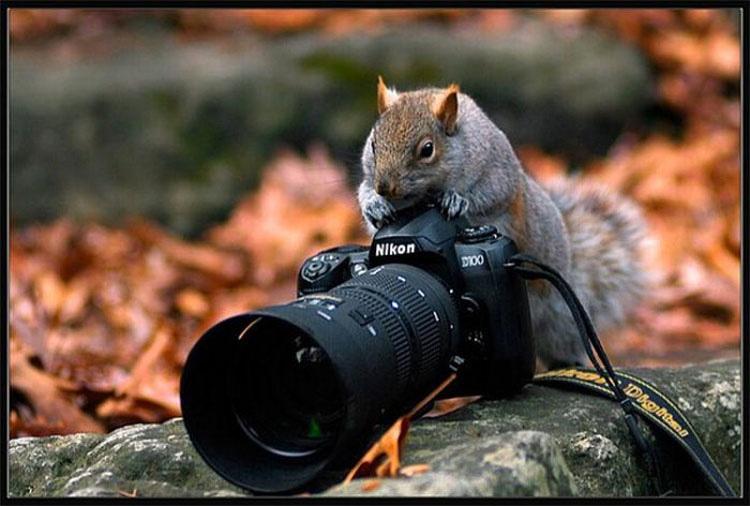 17 Animales Que Probablemente Son Mejores Fotógrafos Que Tú