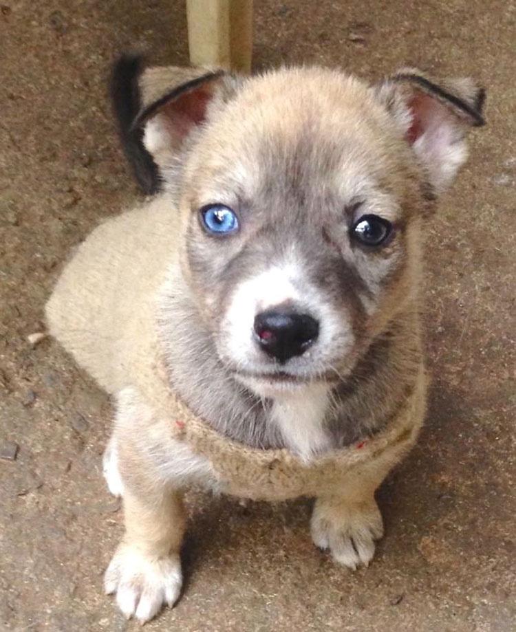 25 Animales Inusuales y Sorprendentes Con Ojos De Diferente Color Que Derretirán Su Corazón