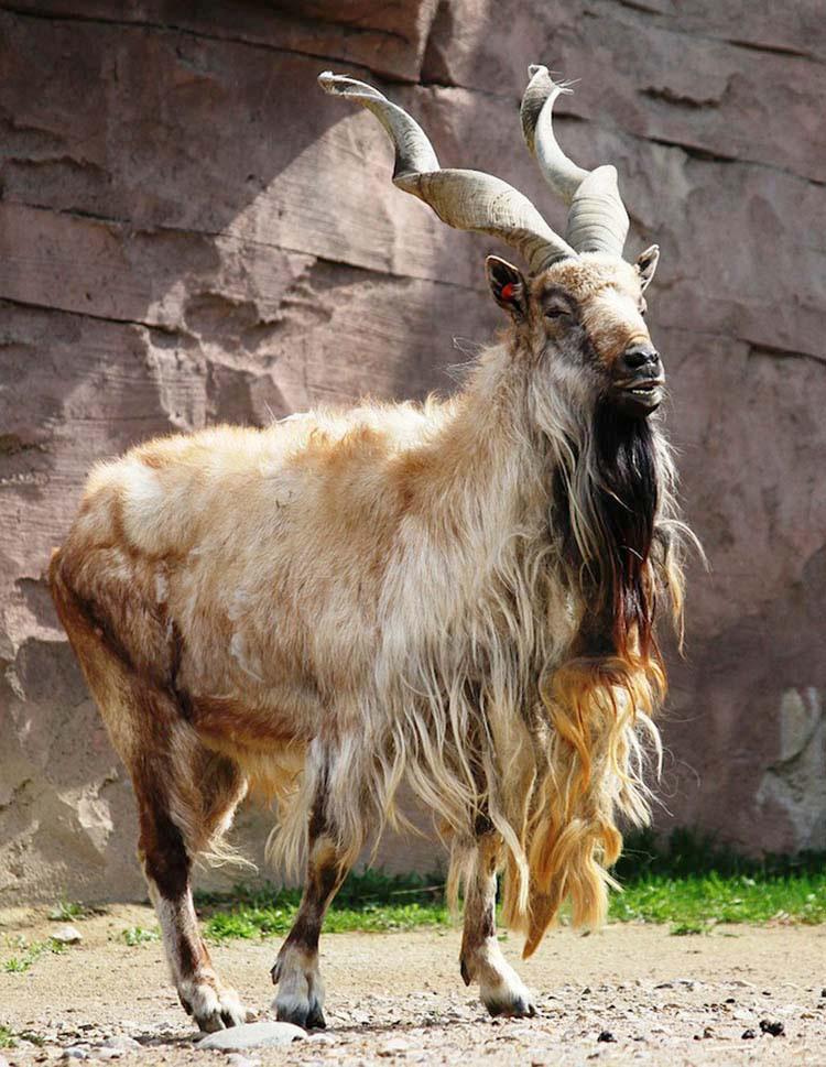 13 Animales Sorprendentes Que No Sabías Que Existían. Atención Al #6