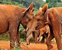 Fotografía Del Día: Elefantes Jugando
