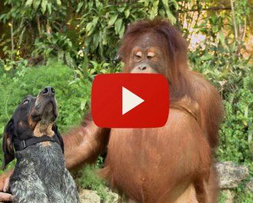 El Vídeo Que Te Hará Feliz Cada Vez Que Lo Veas
