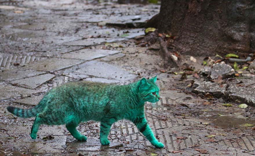 Descubre El Extraño Caso Del Gato Callejero Verde