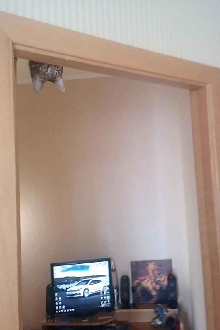 gatos-ninja-10