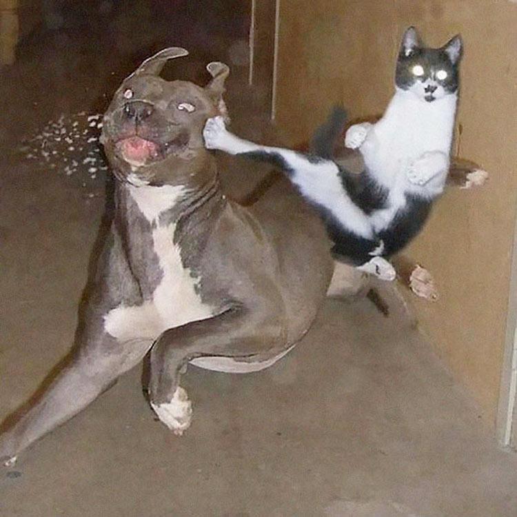 gatos-ninja-12