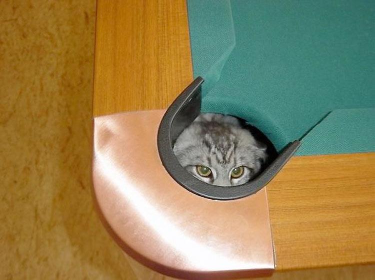 gatos-ninja-13