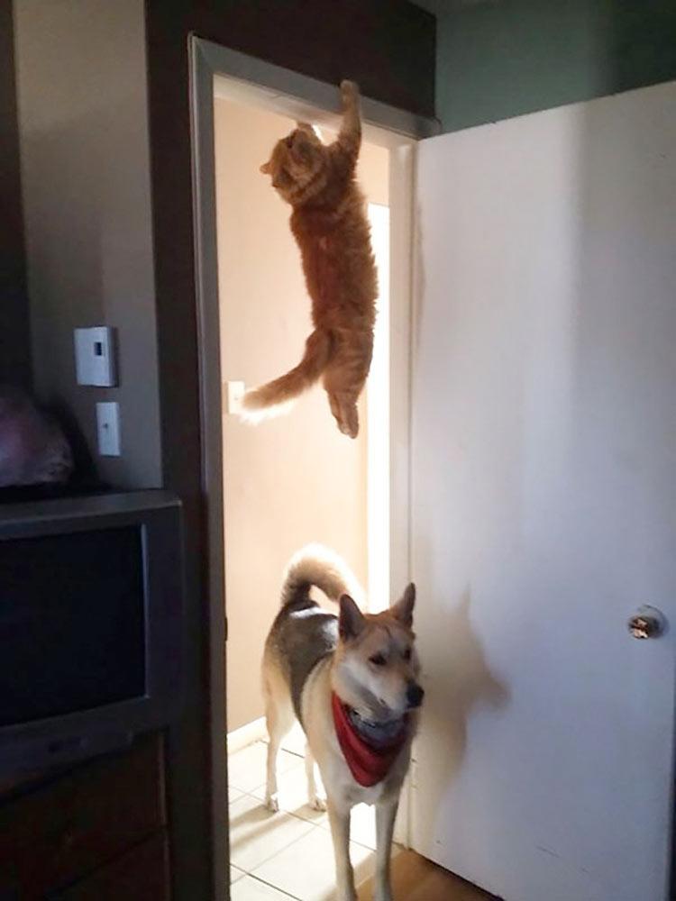 gatos-ninja-2