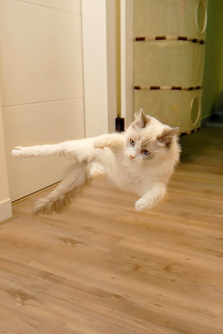 gatos-ninja-21