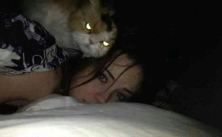 30 Señales De Que Su Gato Está Planeando Matarle
