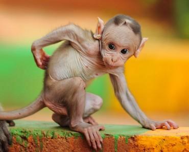 Fotografía Del Día: Macaco bebé