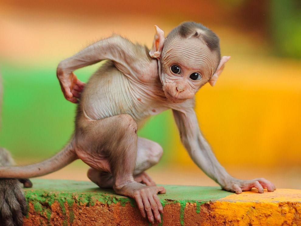 Fotografía Del Día: Macaco bebé 1