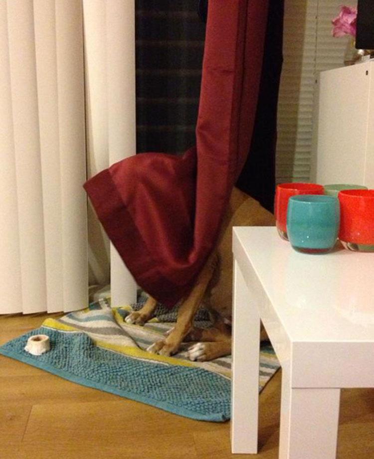 17 Mascotas Que Están Completamente Convencidas De Que No Pueden Verlas