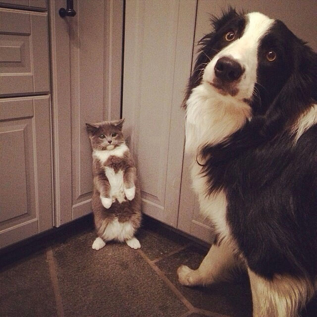 12 Mascotas Que No Saben Por Qué Llegas A Casa Tan Temprano