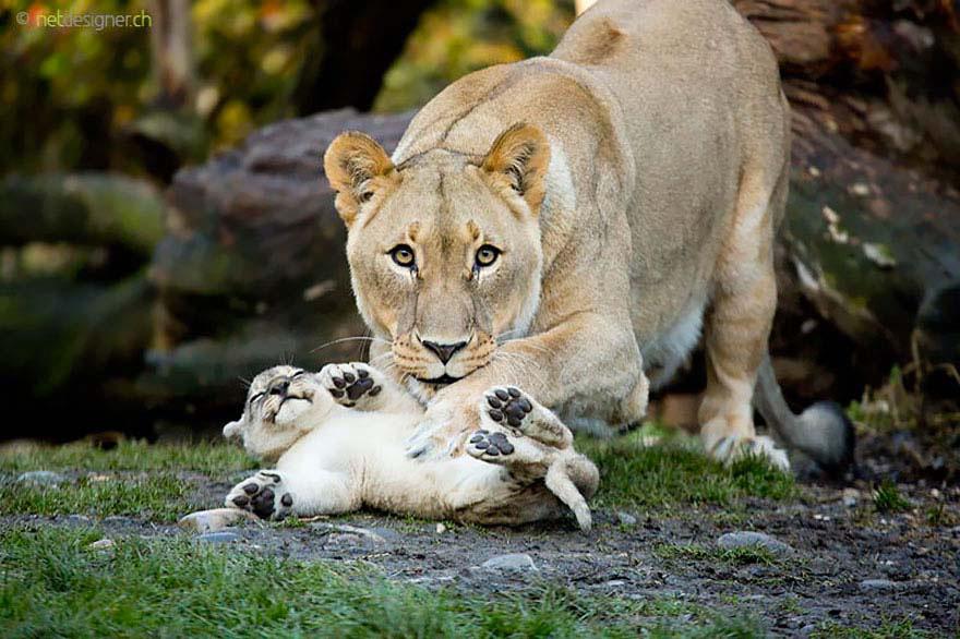 25 De Los Momentos Más Tiernos De Padres E Hijos En El Mundo Animal