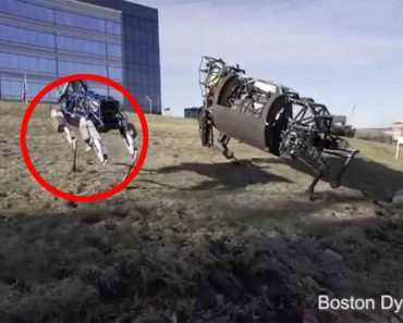 Spot, El Perro Robot Que Asombra Al Mundo