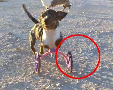 Bubbles, El Perro Que Ahora Puede Correr Gracias A Una Silla De Ruedas Hecha Con Una Impresora 3D