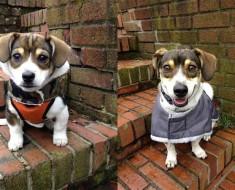 perros-cachorros-5