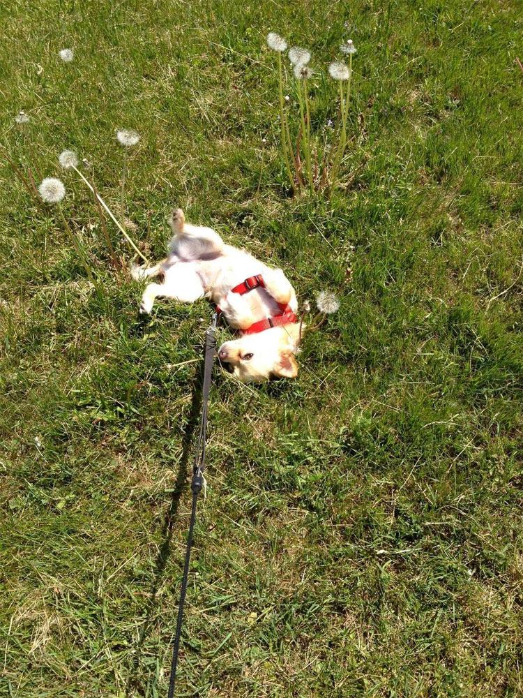 perros-llevados-duenos-14