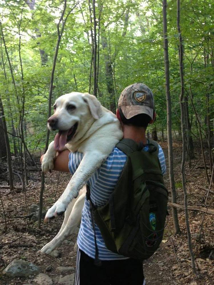 perros-llevados-duenos-22