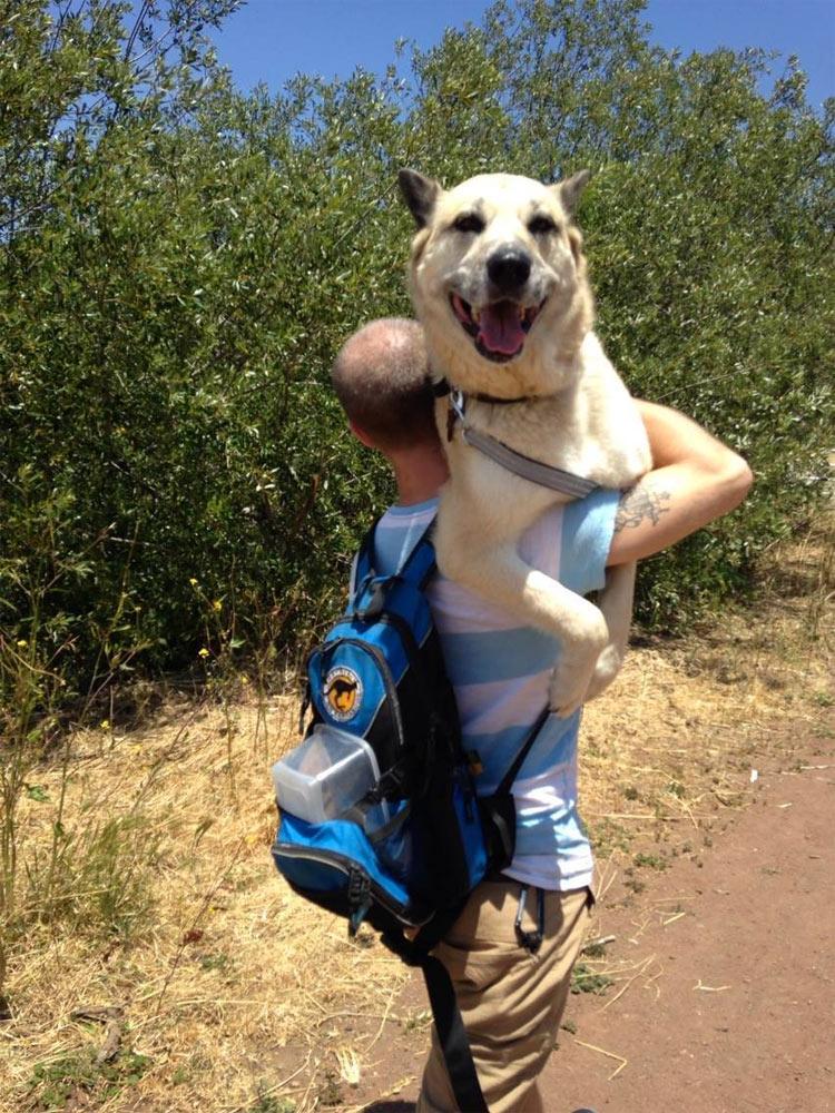 perros-llevados-duenos-3