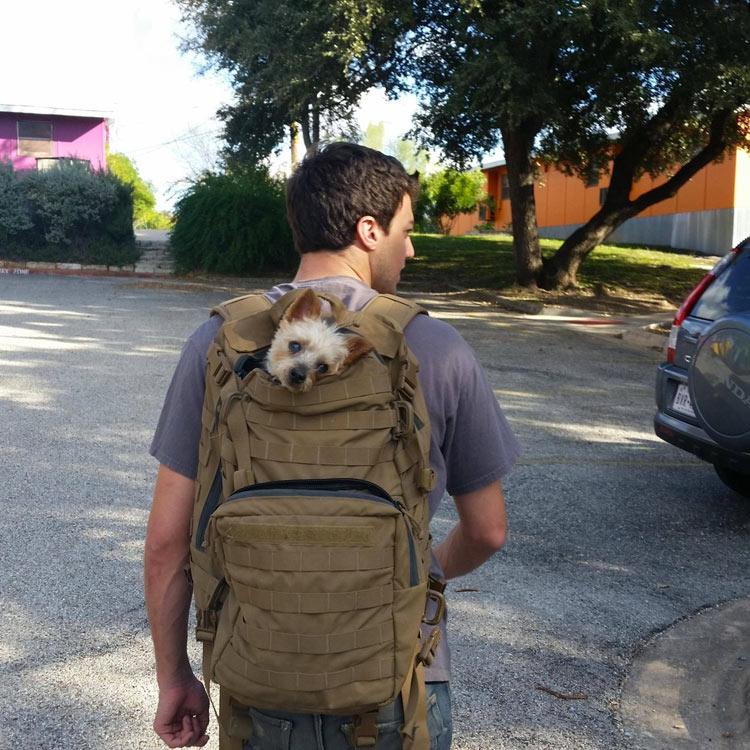 perros-llevados-duenos-30